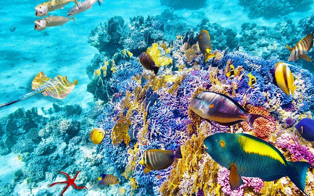 https://active-voyages.fr/wp-content/uploads/2019/02/monde-sous-marin-merveilleux-1024x640.jpg