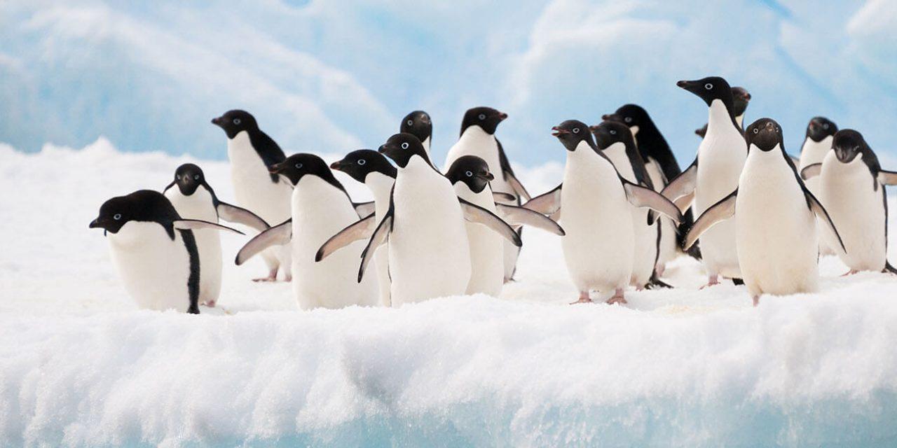 https://active-voyages.fr/wp-content/uploads/2019/05/Manchots-Adélie-colonie-sur-lAntarctique-iceberg_Voyage_sur_mesure_voyage_en_famille_active_voyages_Montpellier-1280x640.jpg