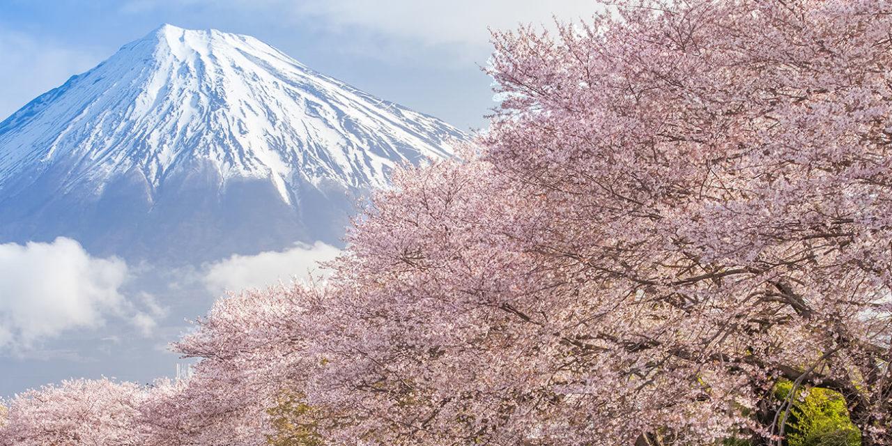 https://active-voyages.fr/wp-content/uploads/2019/11/Belle-fleur-de-cerisier-montagne-Fuji-et-sakura-au-Japon-saison-de-printemps-1280x640.jpg