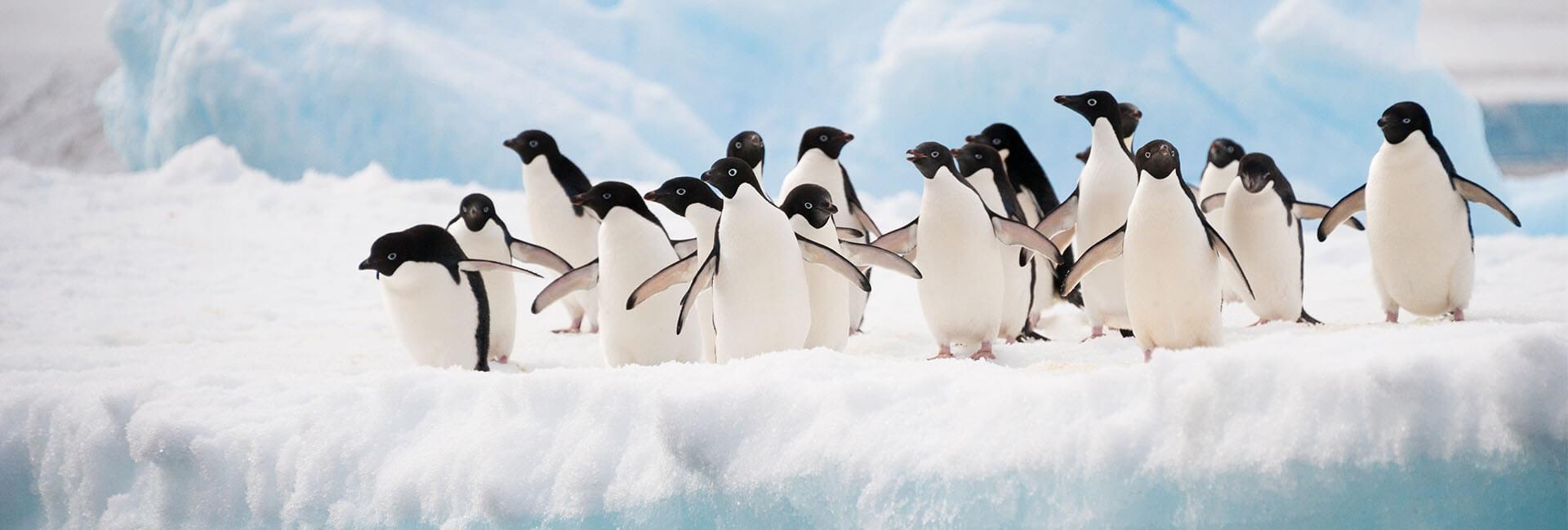 https://active-voyages.fr/wp-content/uploads/2020/02/Manchots-Adélie-colonie-sur-lAntarctique-iceberg.jpg