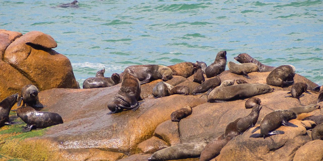 https://active-voyages.fr/wp-content/uploads/2020/02/Sea-wolves-Cabo-Polonio-coast-of-Uruguay_Voyage_sur_mesure_voyage_en_famille_active_voyages_Montpellier-1280x640.jpg
