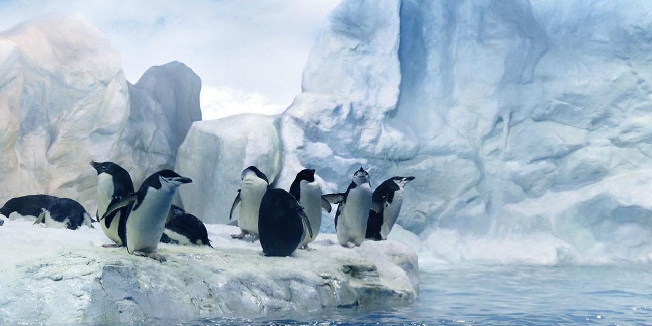 https://active-voyages.fr/wp-content/uploads/2020/02/Tas-de-pingouins-assis-sur-la-banquise-de-fusion-dans-la-région-antarctique-1280x640.jpg