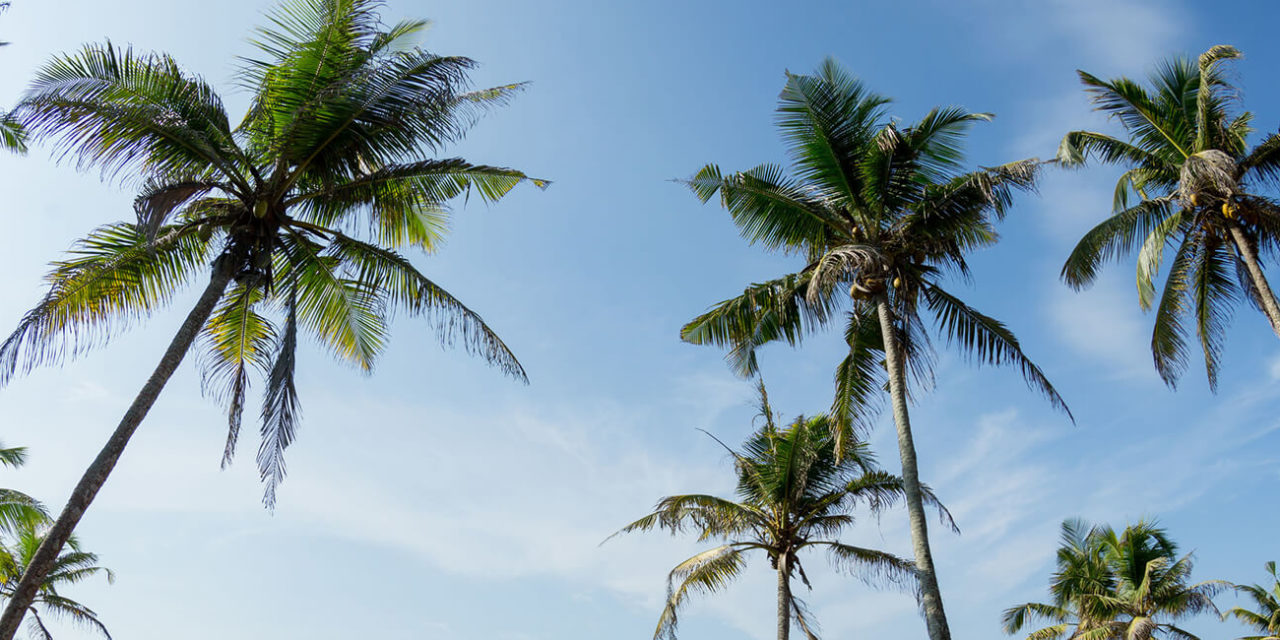 https://active-voyages.fr/wp-content/uploads/2020/03/View-of-coconut-trees-at-seaside-under-blue-skySri-lanka-1280x640.jpg